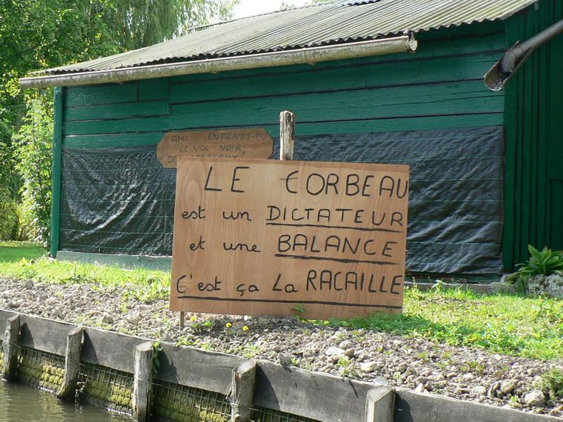 P1250143_corbeau