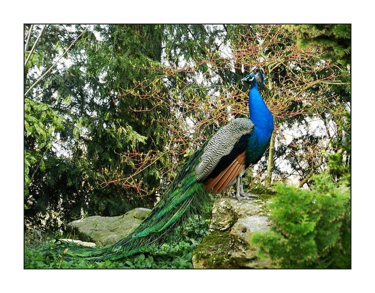 Au Jardin Des Plantes De Rouen Les Oiseaux Allo T Es Ou