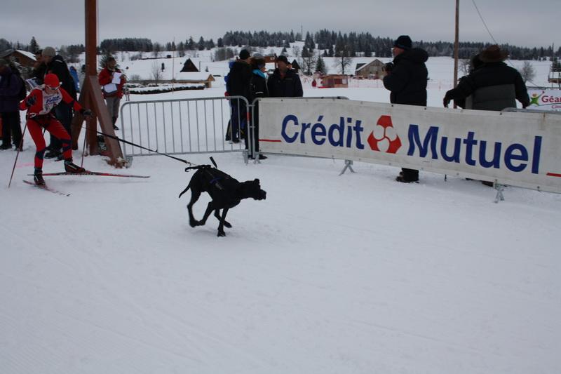 Neige et chiens 007_mg