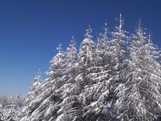 Skis_018_1