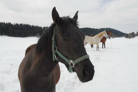Dsc_0027_cheval_1