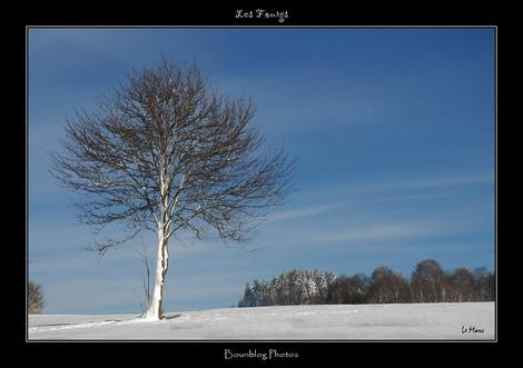 Dsc_0033_neige_arbreborder