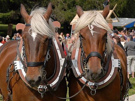 Dsc_0284_tete_de_chevaux