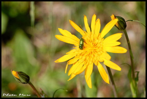 Dsc_00350_fleur_2