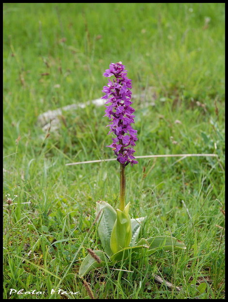 Les_fourgs_orchis_3