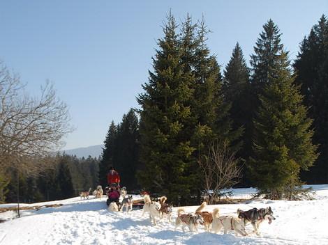 Dsc_0345_bapteme_chiens