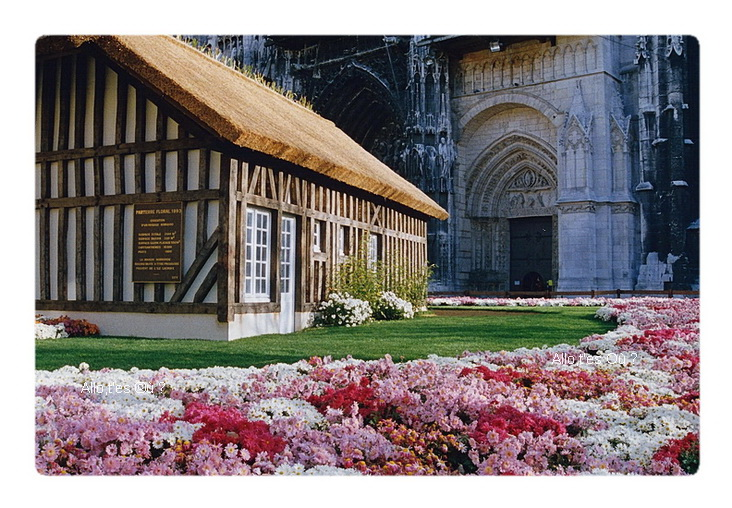 1993_11_00  rouen chrysanthemes 3
