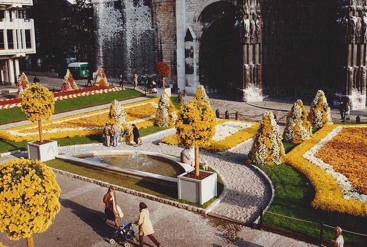 1991-11-01 rouen chrysantheme_2_md