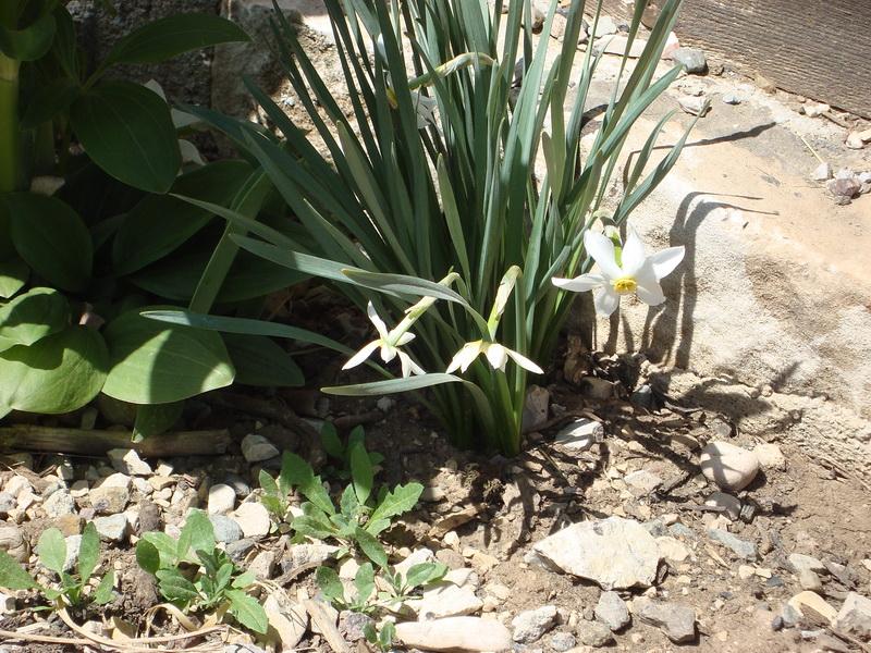 Narcisse 015_ad