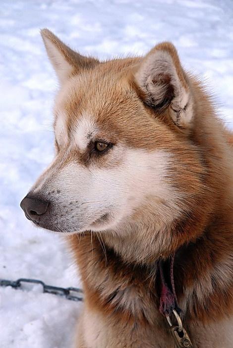 Dsc_0245_1_chiens