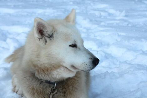 Dsc_0241_chiens