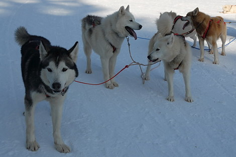 Dsc_0106_chiens