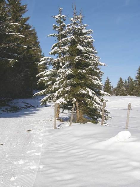 Traces_dans_la_neige
