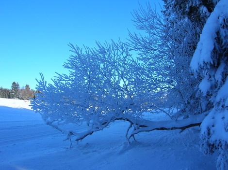 Beaut_hivernale_1