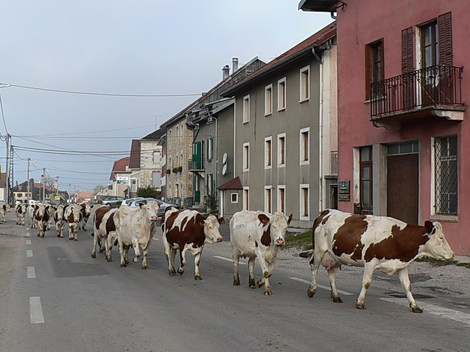P1180135_vaches