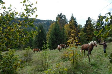 Dsc_0071_chevaux