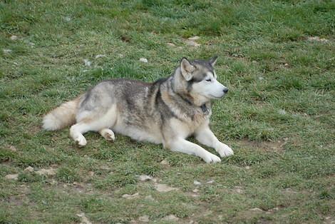 Dsc_0114_chien