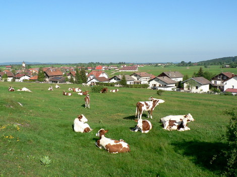 P1140439_vaches_village