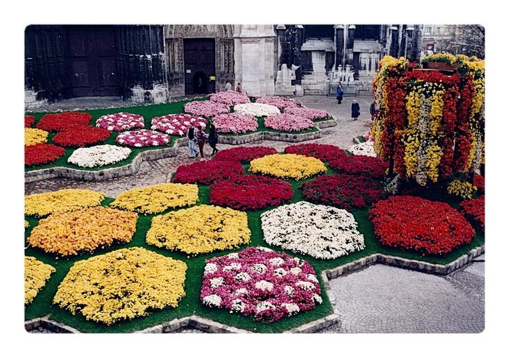 1994-11-01 rouen chrysantheme 1