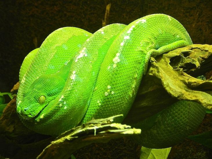 DSCN9228_python emeraude