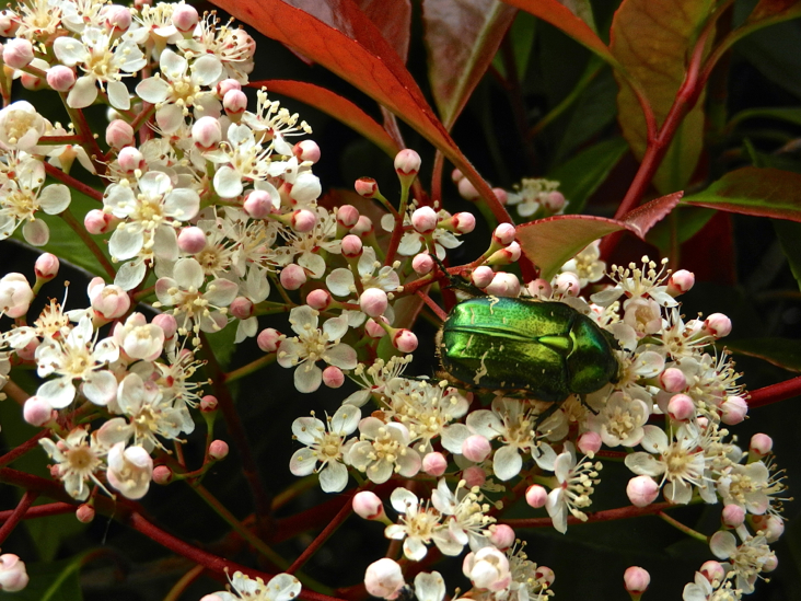 DSCN8504_giverny_insecte