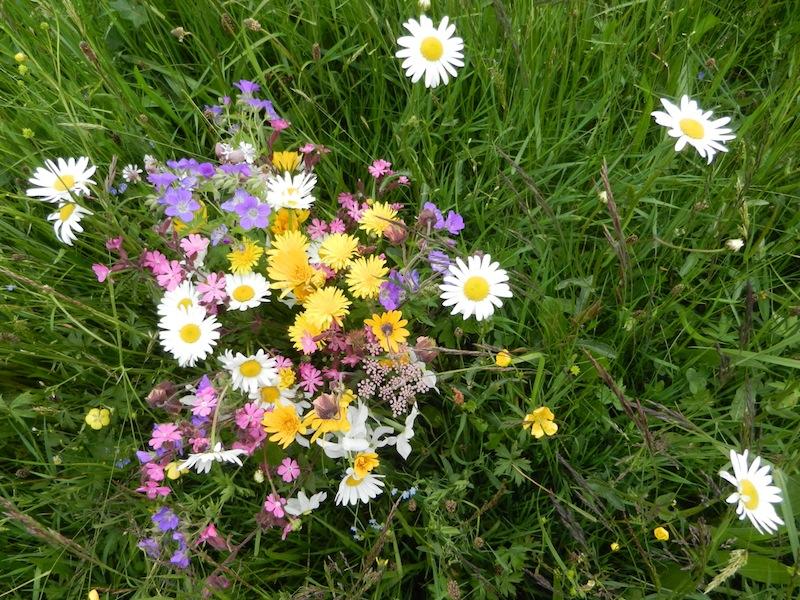 DSCN0235_bouquet_champêtre