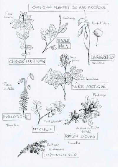 Fleurs - copie 2