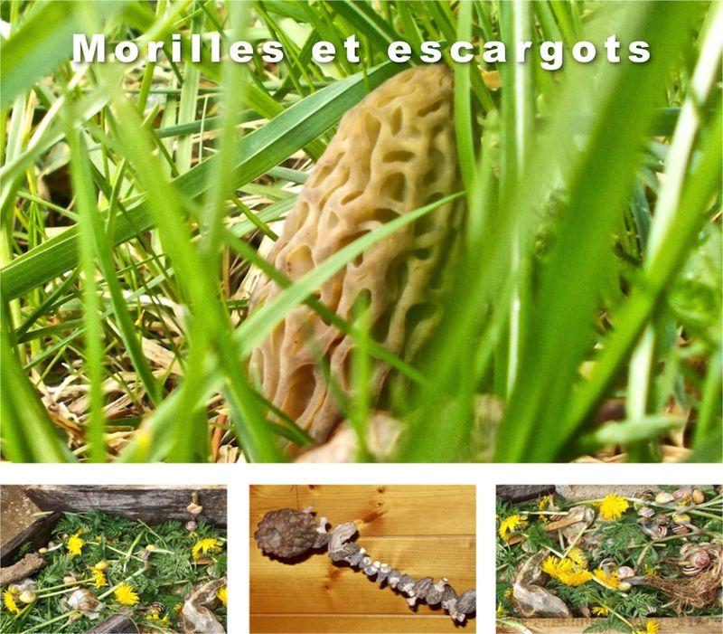 Morilles et escargots 1 - copie