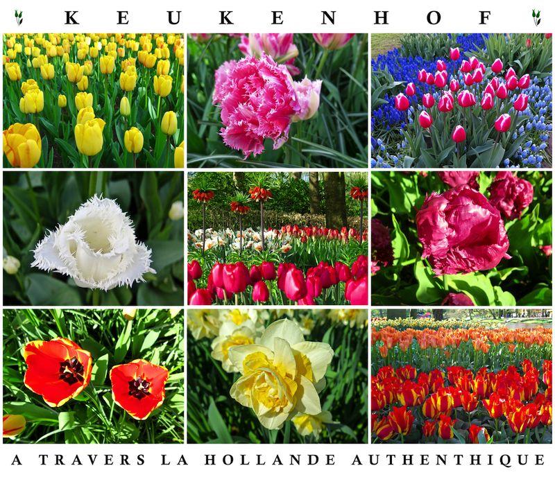 Parc Keukenhof 2 - copie 2