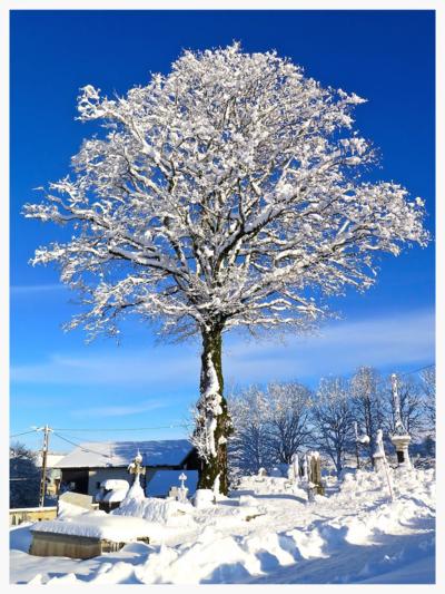 IMG_8858 - arbre - copie