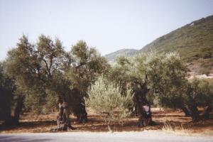 CRETE_arbres 1 copie
