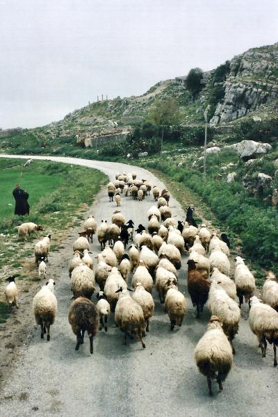 Tunisie 1997-04-17 Douga Rue Mouton