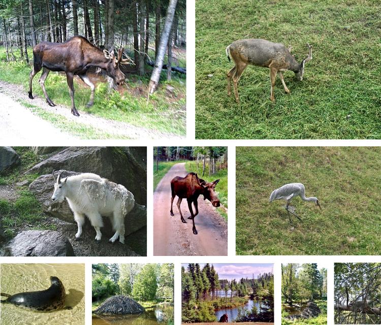 Zoo Saint-Félicien