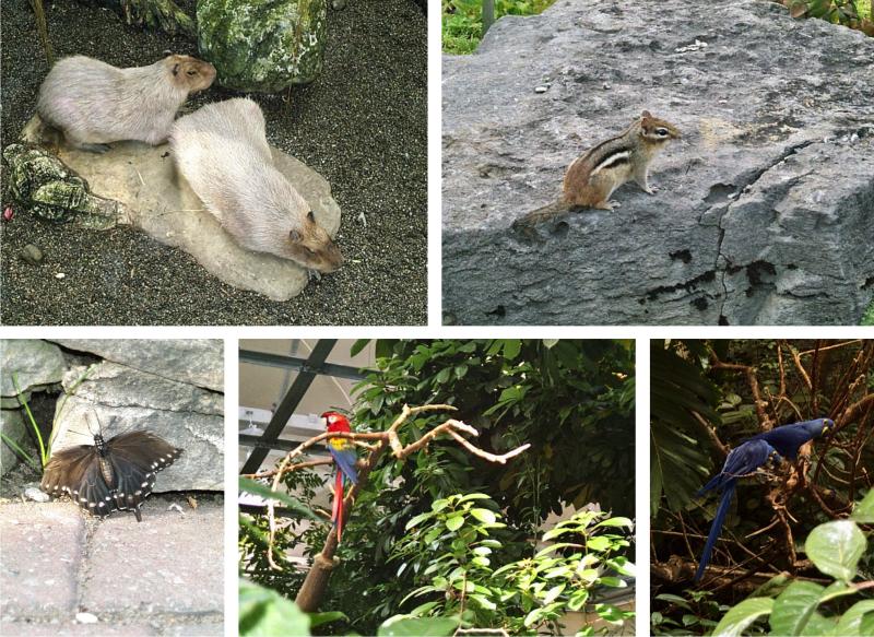 Oiseaux et autres