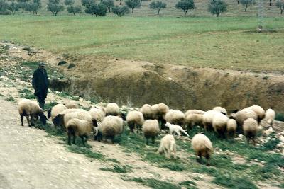Tunisie 1997-04-17 Douga