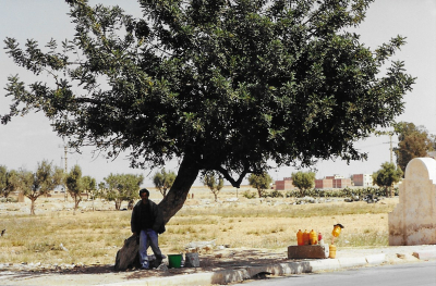 Maroc Oujda Sur la route Olivier