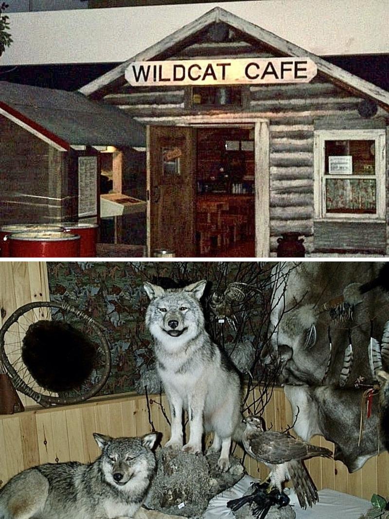 Musée civilisations cafe chiens copie